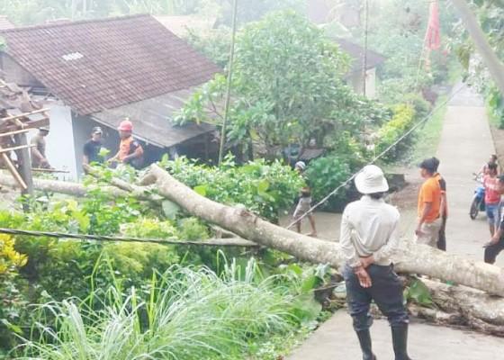 Nusabali.com - hujan-angin-pohon-jati-tumbang-timpa-atap-dapur-kamar-mandi-dan-garase