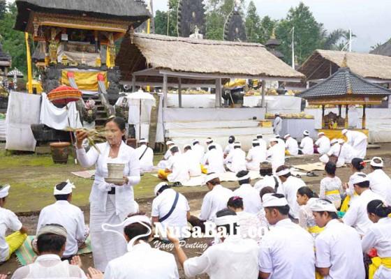 Nusabali.com - tiga-bulanan-di-pura-penataran-agung-nangka