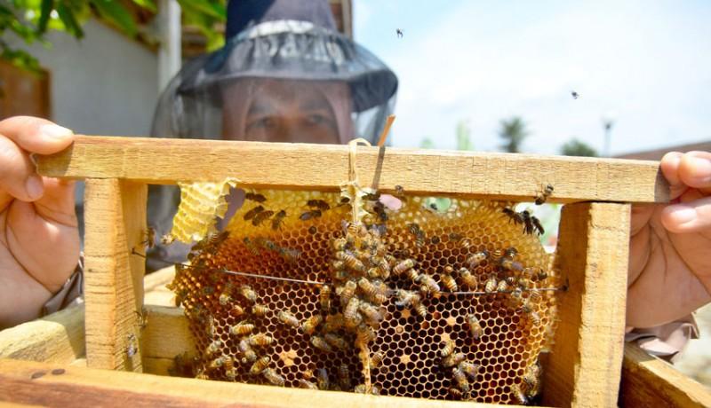 www.nusabali.com-budidaya-madu-lebah-dan-klanceng