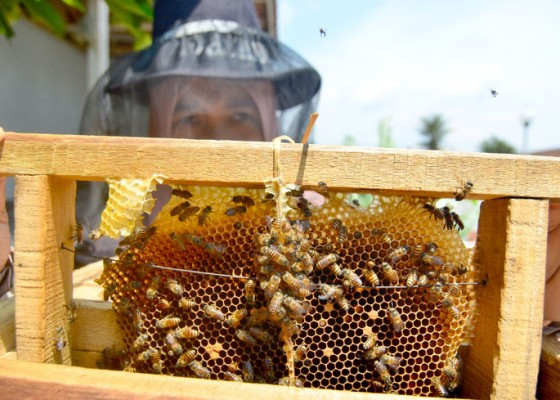 Nusabali.com - budidaya-madu-lebah-dan-klanceng