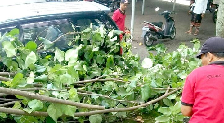 www.nusabali.com-dahan-pohon-waru-tumbang-nyaris-timpa-mobil-pegawai
