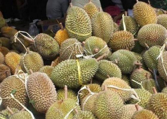 Nusabali.com - durian-buah-naga-dan-salak-tunggu-packing-house
