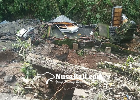 Nusabali.com - musibah-terjadi-sebulan-setelah-pohon-keramat-dipangkas