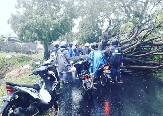 Nusabali.com - korban-selamat-setelah-tergencet-selama-30-menit