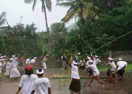 Nusabali.com - 60-krama-lanang-saling-serang-dengan-bambu-3-meter