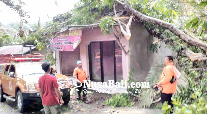 www.nusabali.com-tempat-laundry-tertimpa-pohon-jem-pinis
