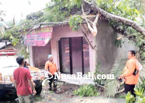 Nusabali.com - tempat-laundry-tertimpa-pohon-jem-pinis