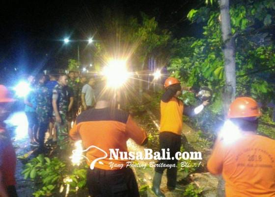 Nusabali.com - pohon-tumbang-arus-lalin-tersendat