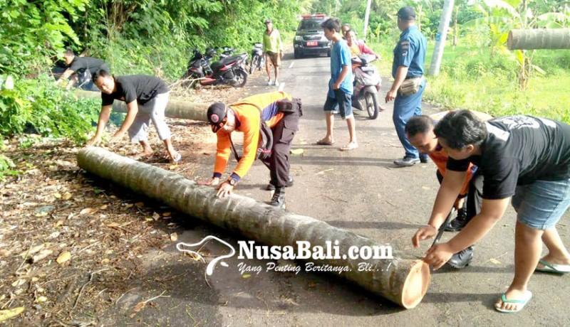 www.nusabali.com-enam-pohon-tumbang-satu-menimpa-rumah