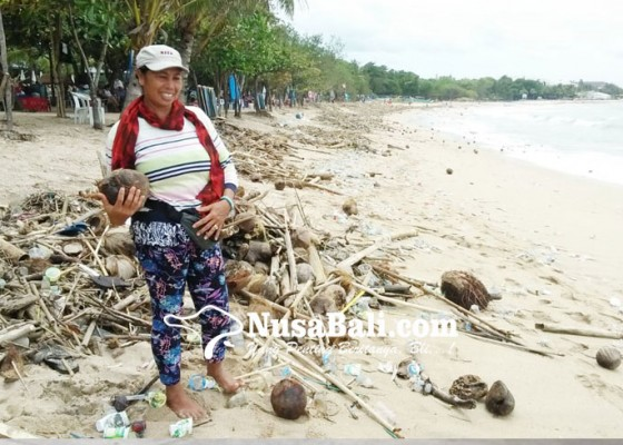 Nusabali.com - pedagang-pungut-kelapa-untuk-diolah-jadi-minyak