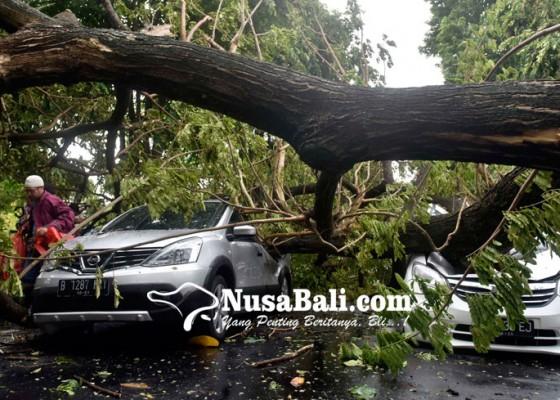 Nusabali.com - petaka-pohon-roboh-1-tewas-1-luka