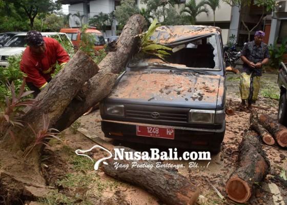 Nusabali.com - anggota-dewan-soroti-pemprov-karena-tidak-antisipasi-pohon-roboh