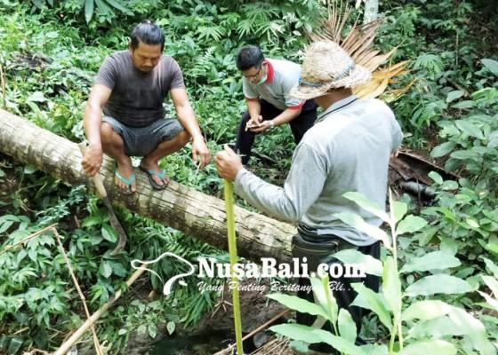 Nusabali.com - peternakan-babi-dituding-buang-limbah-ke-pangkung