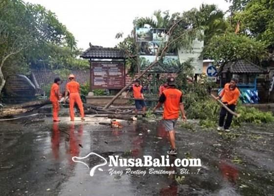 Nusabali.com - pohon-tumbang-di-parkiran-goa-gajah