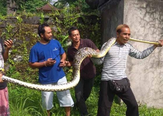 Nusabali.com - sungai-buleleng-diyakini-jadi-habitat-ular-piton