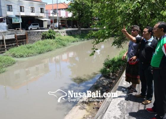 Nusabali.com - dinas-lhk-badung-akan-hijaukan-bantaran-tukad-mati-dengan-tabebuya