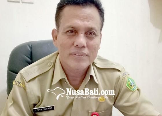 Nusabali.com - populasi-sapi-di-tabanan-turun