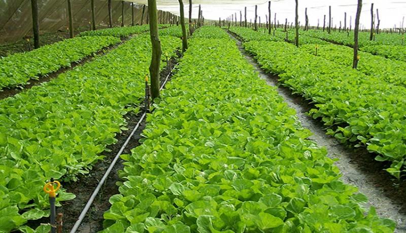 www.nusabali.com-pebisnis-hortikultura-di-bali-berharap-perluasan-ekspor