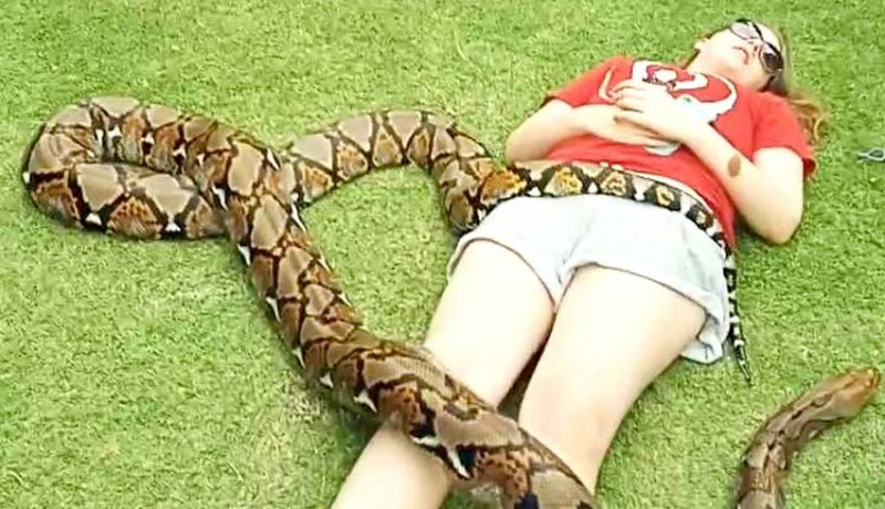 www.nusabali.com-tidur-dengan-ular-piton-wisman-jadi-tontonan