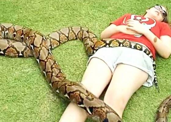 Nusabali.com - tidur-dengan-ular-piton-wisman-jadi-tontonan