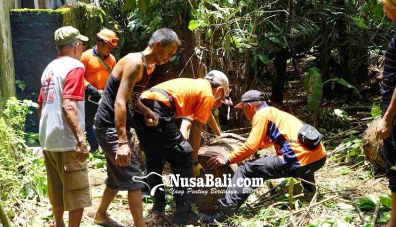 www.nusabali.com-dua-dapur-dan-dua-kamar-kecil-rusak-tertimpa-pohon-aren