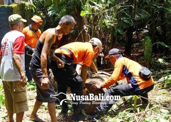 Nusabali.com - dua-dapur-dan-dua-kamar-kecil-rusak-tertimpa-pohon-aren