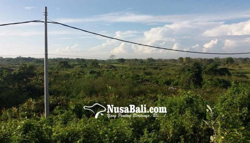 www.nusabali.com-kolam-eks-galian-c-makin-dangkal