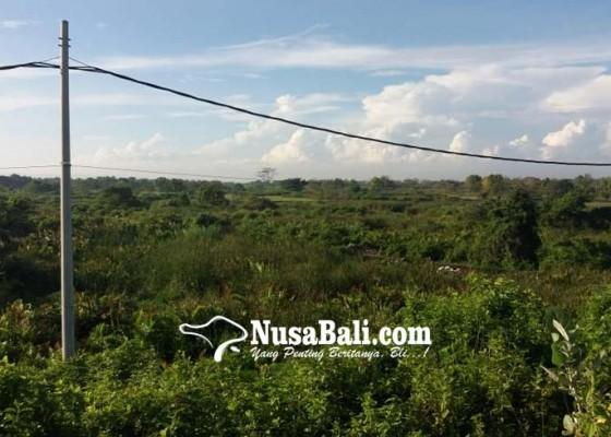 Nusabali.com - kolam-eks-galian-c-makin-dangkal