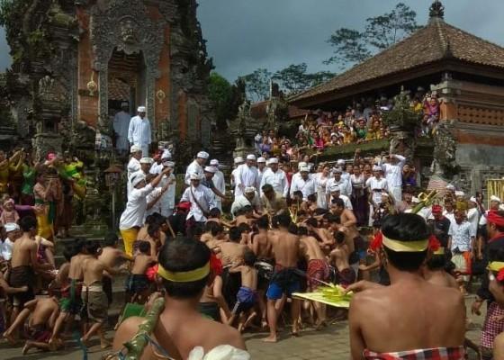 Nusabali.com - ritual-nuhu-ratusan-anak-berebut-sarana-upacara