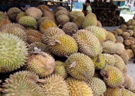 Nusabali.com - durian-kunyit-sudah-terdaftar-varietas-sdg