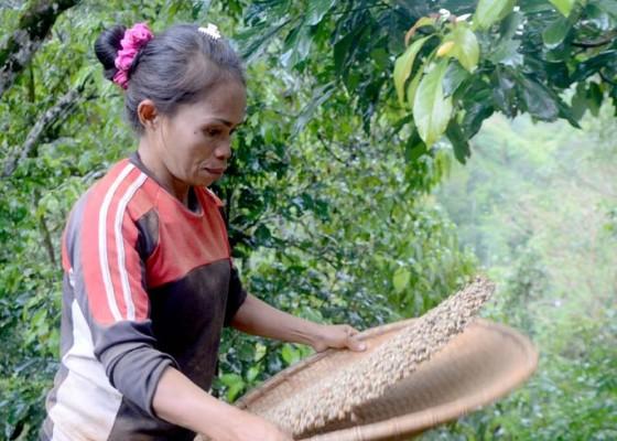 Nusabali.com - ekspor-komoditas-perkebunan-bali-terancam