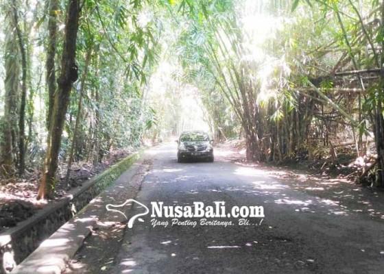 Nusabali.com - jalur-penglipuran-buungan-minim-lpj