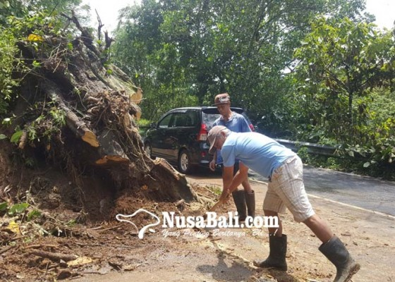 Nusabali.com - banjir-di-gitgit-jalur-denpasar-singaraja-sempat-lumpuh