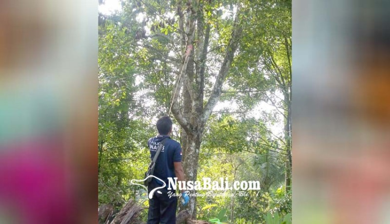 www.nusabali.com-frustrasi-sakit-tipes-petani-gantung-diri