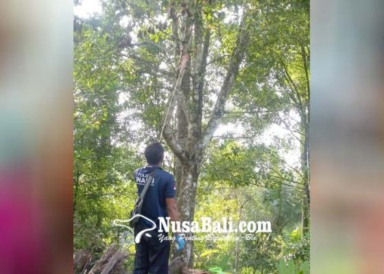 Nusabali.com - frustrasi-sakit-tipes-petani-gantung-diri