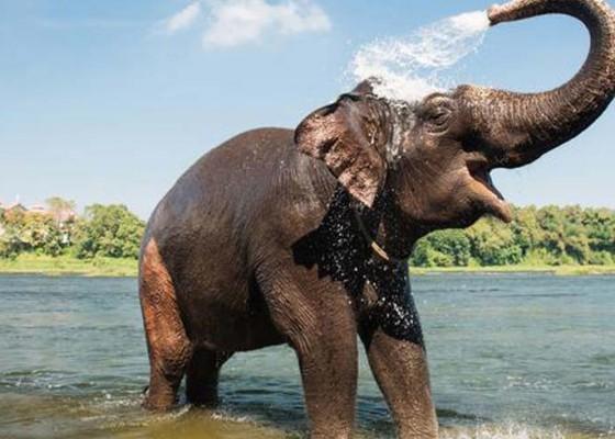 Nusabali.com - meditasi-biksu-tewas-diinjak-gajah