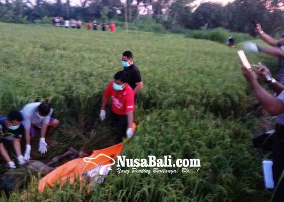 Nusabali.com - hilang-4-hari-dadong-ditemukan-membusuk-di-sawah