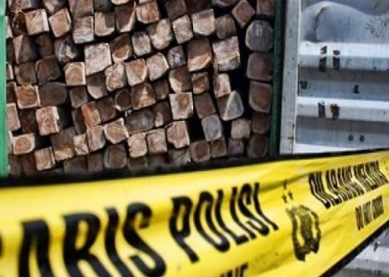Nusabali.com - pencuri-kayu-pinus-hutan-diringkus