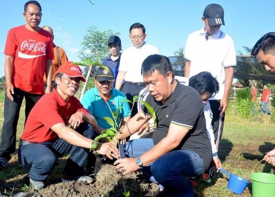 Nusabali.com - sebanyak-50350-pohon-di-denpasar-diasuransikan
