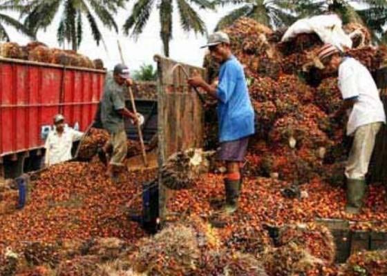 Nusabali.com - petani-sawit-bahas-lahan-dan-harga