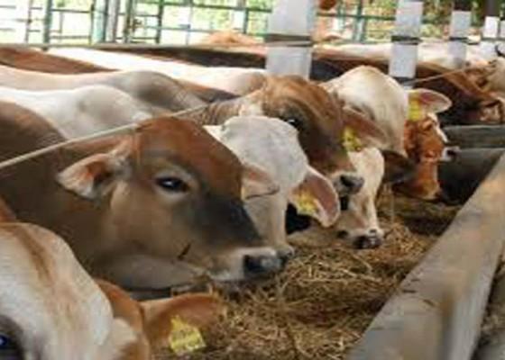 Nusabali.com - sentra-ternak-sobangan-dongkrak-populasi-sapi-di-badung