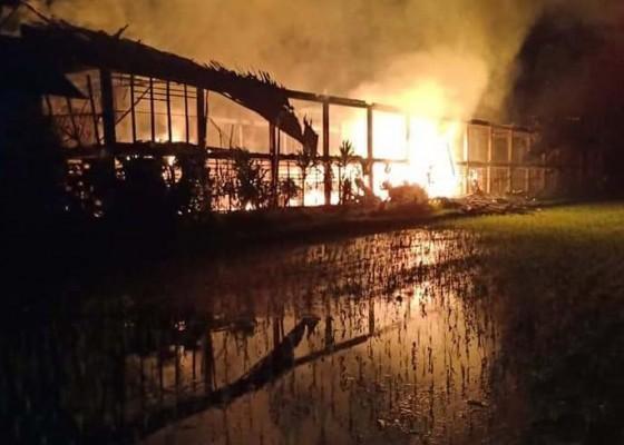 Nusabali.com - kandang-terbakar-5000-ayam-terpanggang