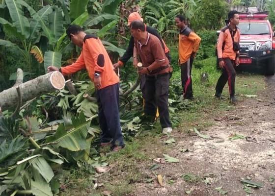 Nusabali.com - bpbd-tangani-sejumlah-pohon-tumbang