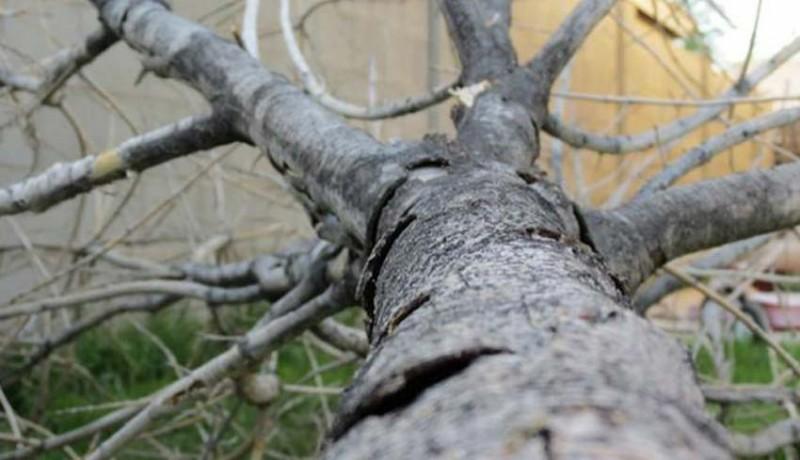 www.nusabali.com-pohon-tumbang-timpa-bale-piasan-pura-dalem-pasek