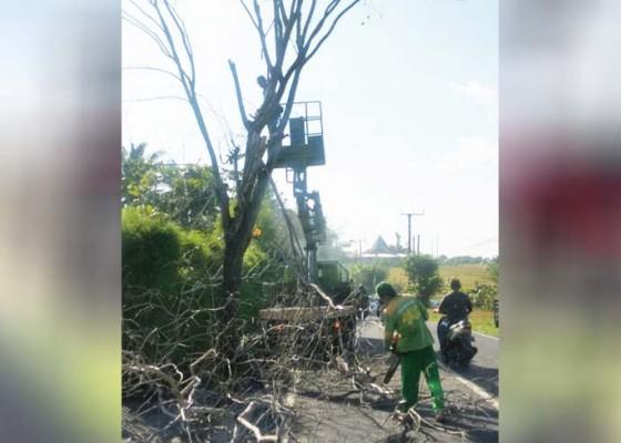 Nusabali.com - 25-pohon-perindang-ditemukan-mati