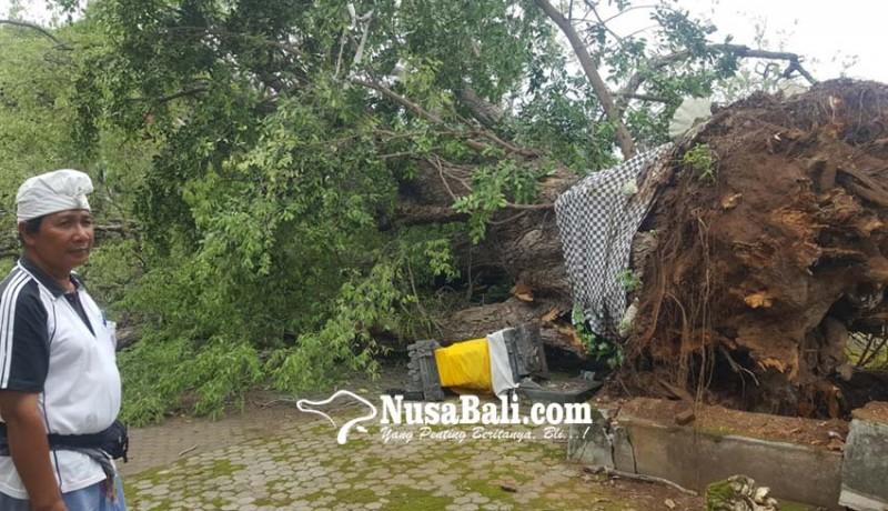 www.nusabali.com-pohon-asam-keramat-roboh-semua-palinggih-di-utama-mandala-hancur
