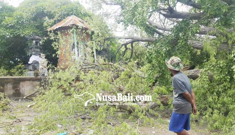 www.nusabali.com-pohon-keramat-di-pura-dalem-joanyar-kajanan-dibersihkan