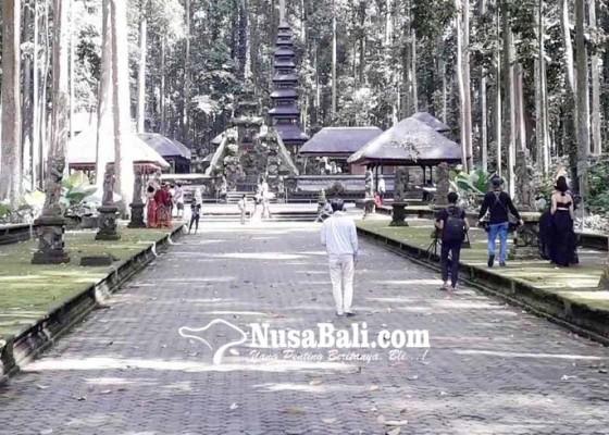 Nusabali.com - badung-gelontor-rp-71-miliar-tata-objek-wisata-sangeh