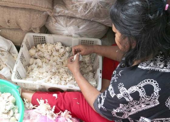 Nusabali.com - 100-ribu-bawang-putih-segera-diimpor