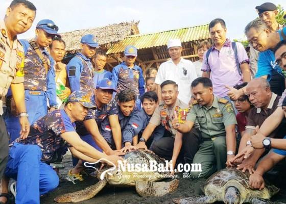 Nusabali.com - dua-penyu-selundupan-dilepasliarkan